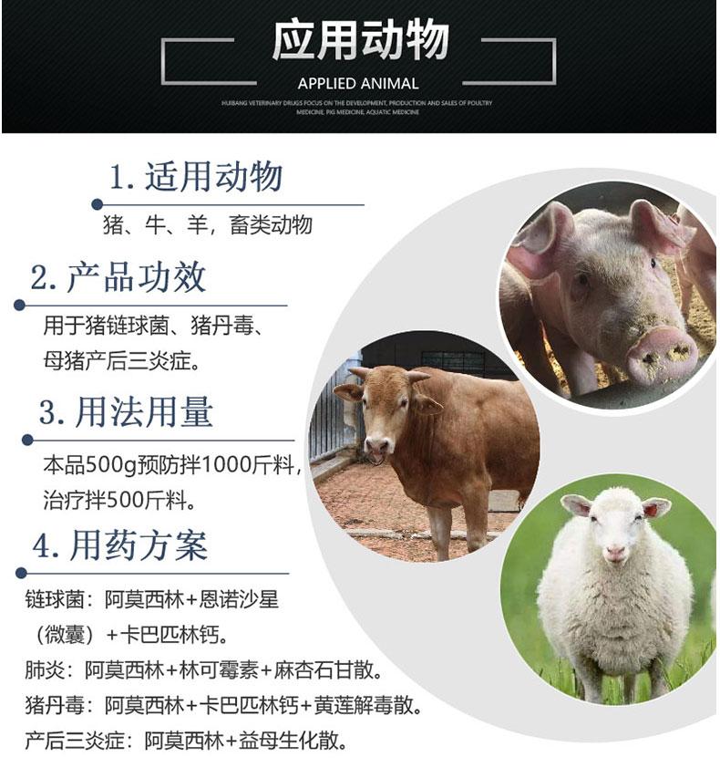 10%阿莫西林500g-动物图.jpg