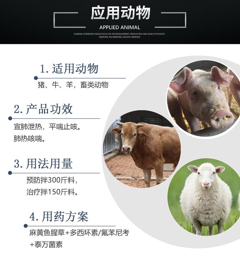 麻黄鱼腥草-猪用适用图.JPG