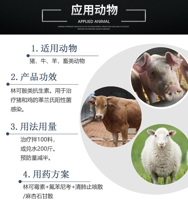 10%盐酸林可霉素-猪用适用图.JPG