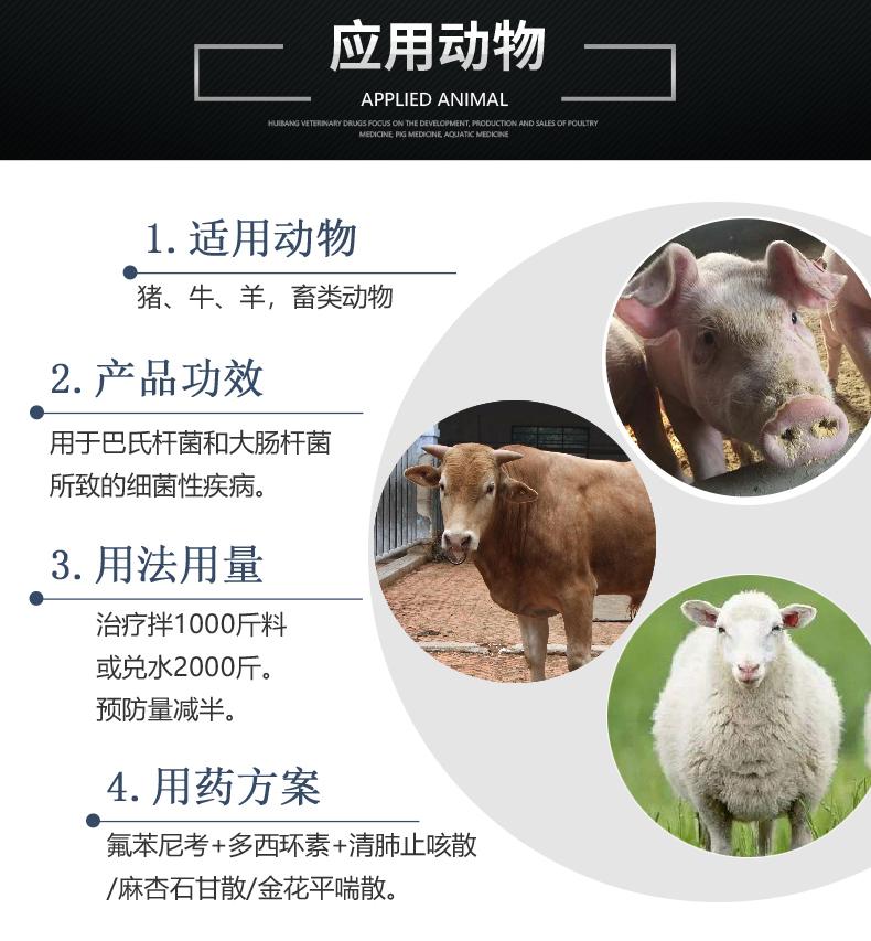 20%氟苯尼考粉500g-猪用适用图.JPG